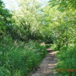 Rowan Creek Trail